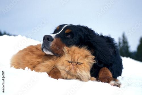 Poster de jardin Vache Chien et chat dans la neige