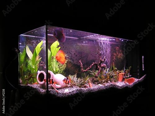Fotografia aquarium