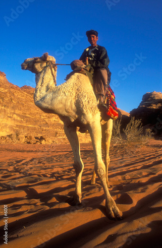 Vászonkép  jordanie chameau wadi rum