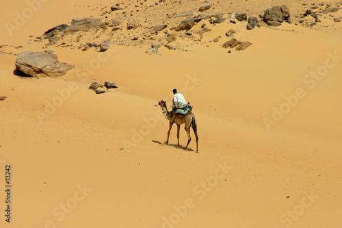 Fotografering  chameau et beduin dans le désert d'egypte