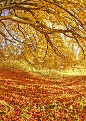Panel Szklany Eko autumns
