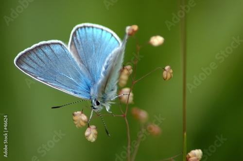 Foto-Kuscheldecke premium - papillon azuré (von Alain Gaymard)