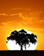 canvas print picture - tree at sunset