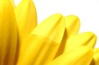 canvas print picture - yellow petals