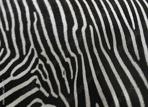 Fotobehang Zebra barcode