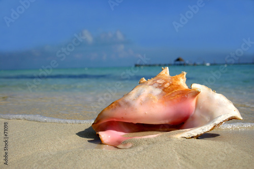 beach conch Fototapete