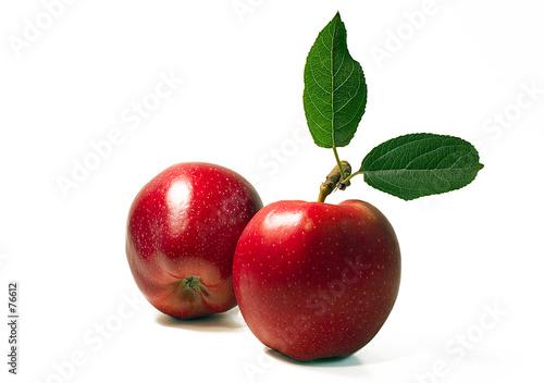 Fotografie, Obraz  two apples