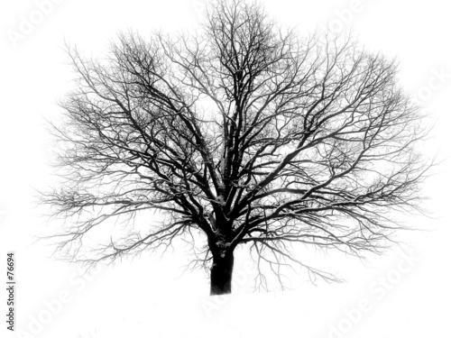 Vászonkép barnchy tree