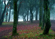 canvas print picture fog