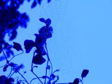 Solarised Spider Web