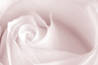 canvas print picture pink rose