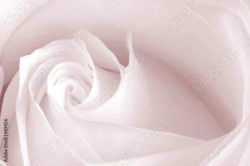 Obrazy kwiaty   rozowa-roza