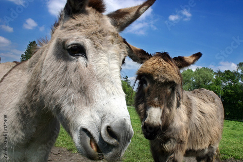 Foto op Aluminium Ezel donkeys