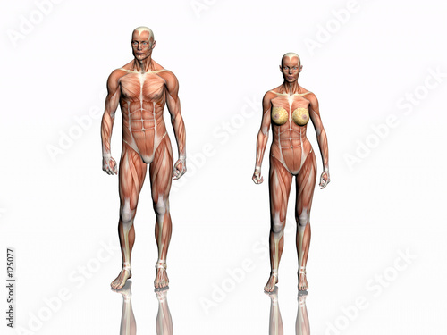 Stampa su Tela anatomy of man and woman.