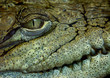canvas print picture - crocodile