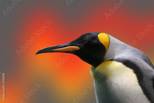 Fotomural penguin