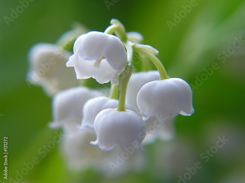 Fotobehang Macro lily of the valley