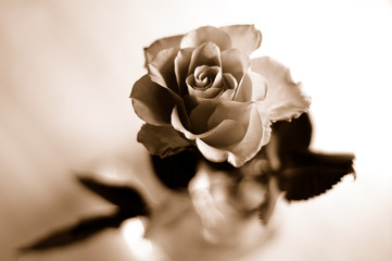 rose in sepia tone