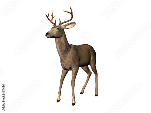 Poster Antilope deer