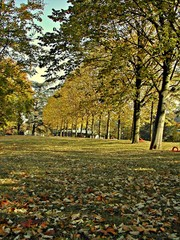 arbres en automne-trees in automne