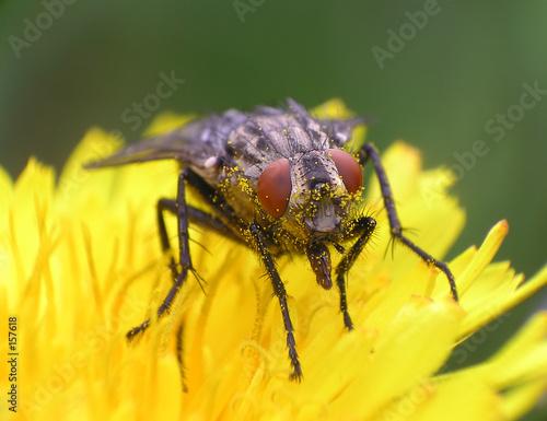 Aluminium Prints Bee fly