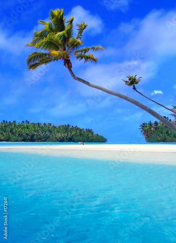 Foto-Stoff - aitutaki palm (von Kwest)