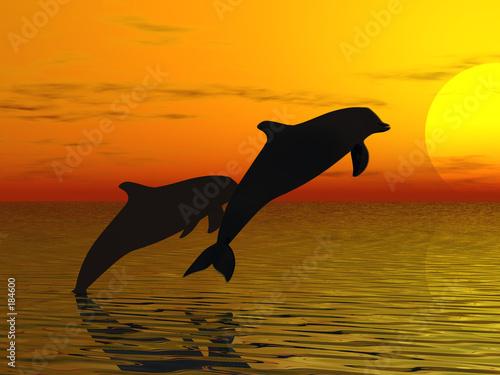 Foto-Teppich - two dolphins swimming (von roxxyphotos)
