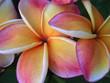 canvas print picture - exotische blume