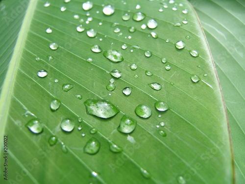 Foto-Duschvorhang - gouttelettes sur une feuille vertes (von Gautier Willaume)
