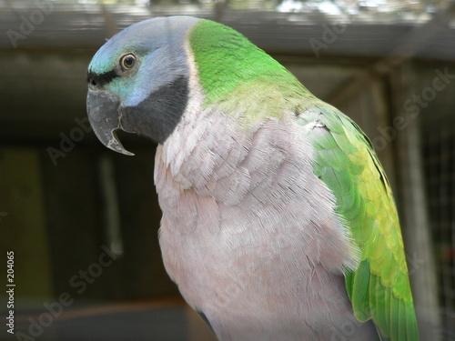 Fotografie, Obraz  parrot