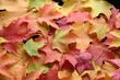 canvas print picture - multicolored leaves 1