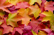 canvas print picture - multicolored leaves 2