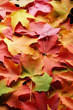 canvas print picture - multicolored leaves 3