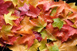 canvas print picture - multicolored leaves 4