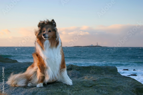Stoff bedrucken - dog in the wind (von Joss)