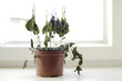 canvas print picture - vertrocknete pflanze