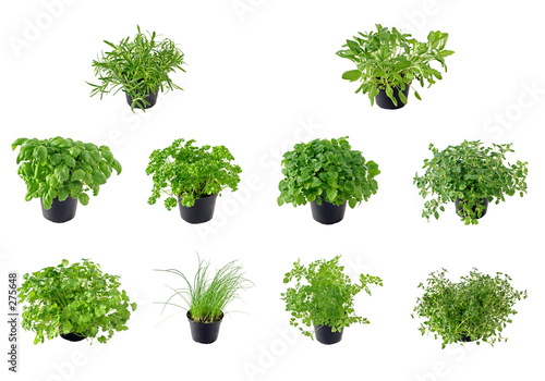 Fototapeta the herb collection obraz
