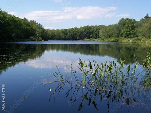 Fotografie, Obraz  the pond at ferry beach