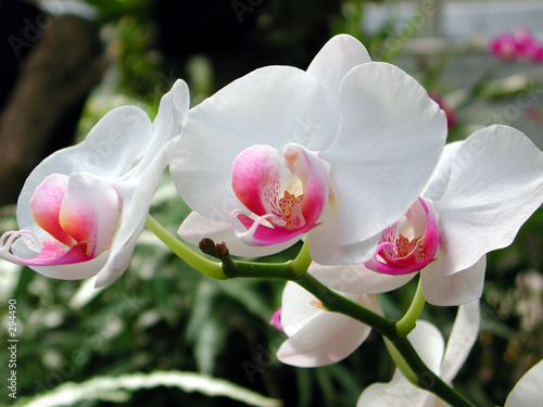 a cluster of white orchids - 294490