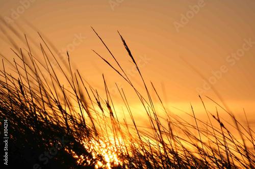 Foto-Vorhang - gräser im wind (von Esther Hildebrandt)