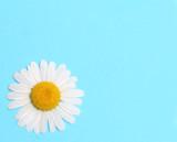 daisy note
