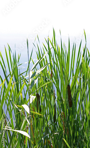 Foto-Lamellen - lake shore plants (von Tinka)