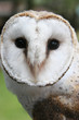 face of an owl