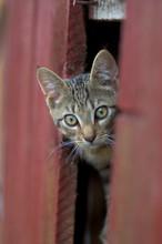 Grey Cat Peeking