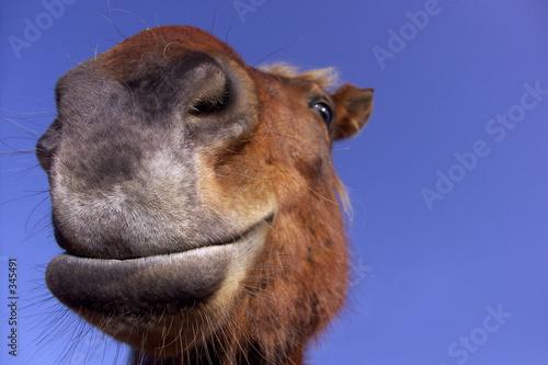Fényképezés  cheval de près