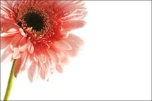Flower Calling Card
