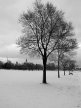 Winter Trees 02