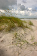 sea oats and dunes
