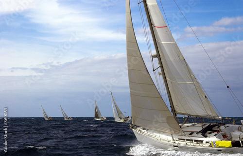 Garden Poster Sailing transquadra race
