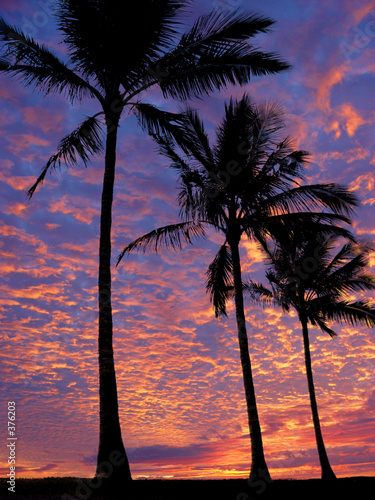 Foto-Schiebegardine Komplettsystem - 3 palm trees on the beach at sunset